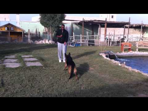 William from Kuwait-Training mY dog-K9
