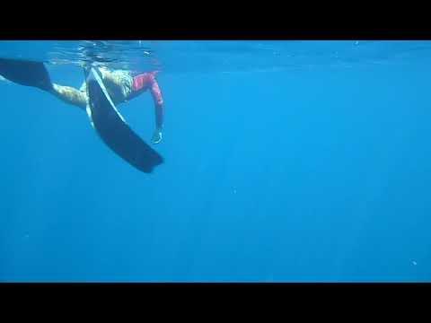 freediving menjangan five years ago :)