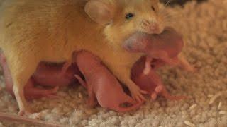 Tess nursing the Litter thumbnail