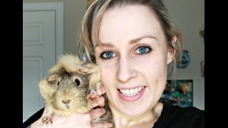 GoPro: Guinea Pig Morning Routine (6 Guinea Pigs & 1 Rabbit)