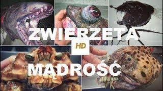 Mądrość Jak starzeją się zwierzęta HD Film Dokumentalny Lektor PL
