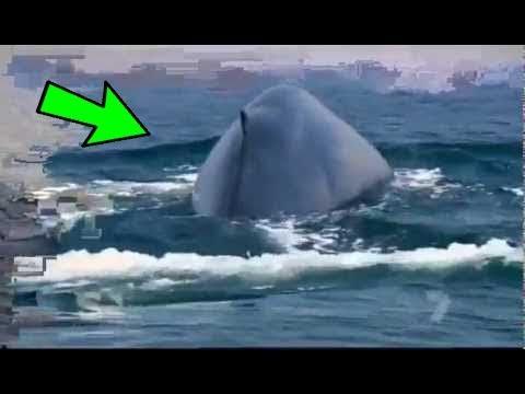 الحقيقة الكاملة حقيقة صوت الحوت الأزرق الذي أفزع الناس ظهور اكبر علامة من علامات الساعة الكبرى Youtube