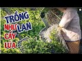 Lần Đầu Mới Thấy Người Thái Trồng Lan Như Làm Mạ Cấy Lúa Vậy | #MêLanTV
