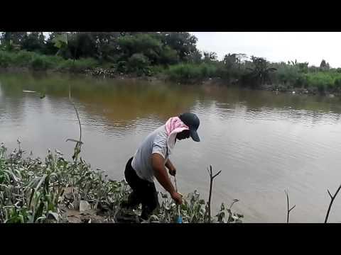Mancing ikan keli dapat besar 10 kg