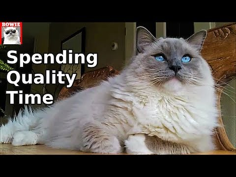 Spending Quality Time With My Ragdoll Cat