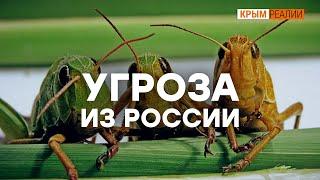 «Божья кара» в Крыму Крым.Настоящий