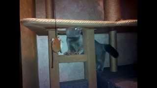 Когтеточка, игровой комплекс для кота своими руками