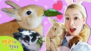 [엘리가간다] 토끼가 가득한 토끼카페에 가다ㅣ홍대 애완동물 체험 | 엘리앤 투어