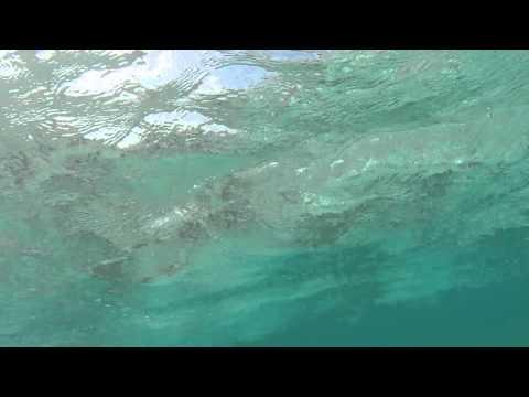 Tuvalu Funafuti conservation area Snorkelling Tepuka island, Gopro