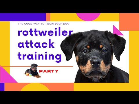 rottweiler-attack-training-how-to-train-your-dog-to-attack-(part7)-how-to-house-train-a-dog