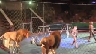 ЧП Цирка ужас львы и тигры напали на человека  Цирк в Луганске борьба животных