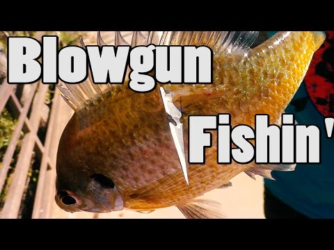 Fishing With Blowguns Pt. 2!