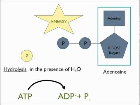 Introduction to ATP