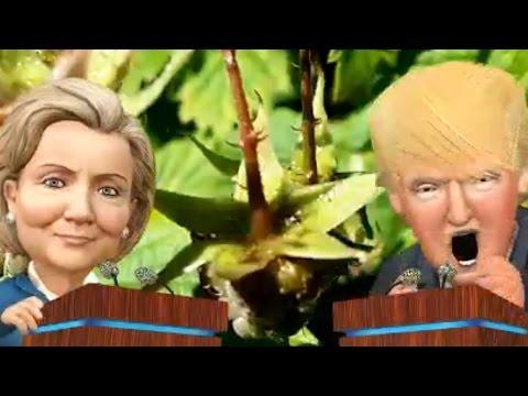 Donald Trump - Hillary Clinton erstellt mit Zoobe