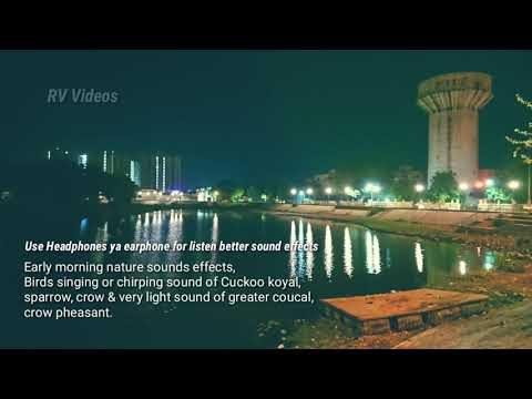 Song Indian cuckoo bird sound mp3 Mp3 & Mp4 Download