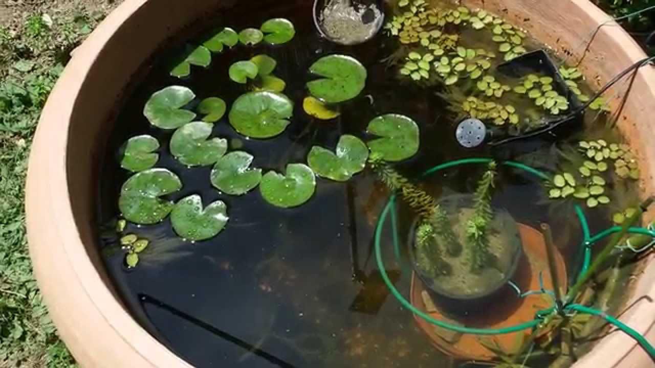 mini pond completo di piante acquatiche youtube
