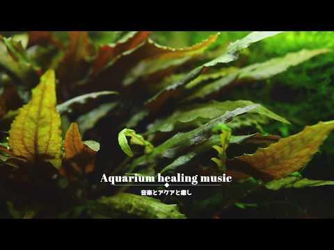 癒しと魚と音楽  Let The New Begin Reset by CHPTRS【aquarium healing music】