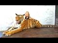 24 часа тигр