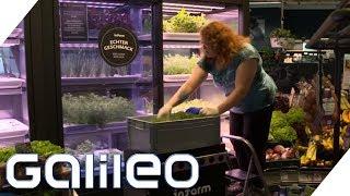 Frisch, frischer - Gewächshaus im Supermarkt | Galileo | ProSieben