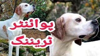 pointer dog,dog training