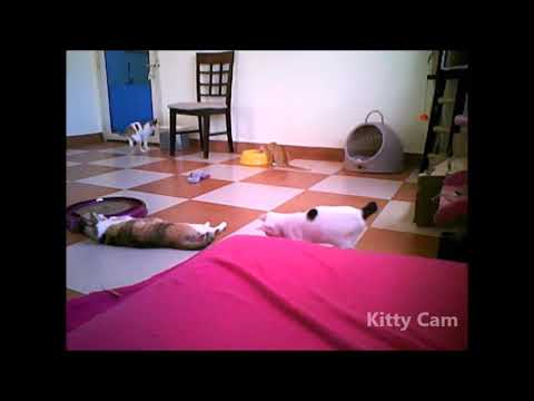 Kitty Cam 20th October 2017: Semi Live Stream of Shelter Rescues ...