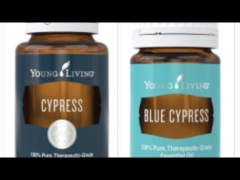 cypress-&-blue-cypress-essential-oil-whats-the-difference?