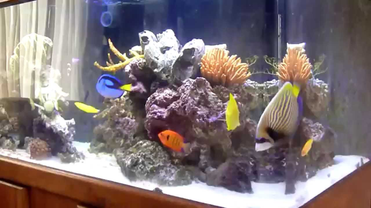 Colorful Fish Collection In My Wide 100 Gallon Saltwater