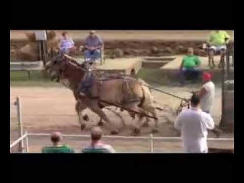 Athens Showcase: Horse Pull at Athens County Fair 2015