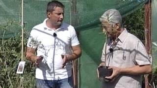In gradina Danei interviu cu Marin Constantin producator arbusti goji
