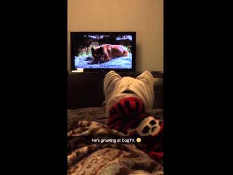 MuShu Billard Loves DogTV