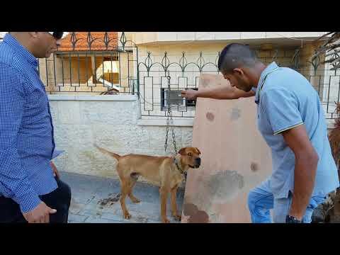 بعد مرور شهر على الكلب الذي عض صاحبه لن يثق باي انسان مهما اطعمته مع جمال العمواسي
