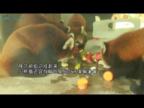 Hot! Hot! Hot! How do animals in Hangzhou Zoo spend the summer?