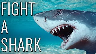 How To Fight A Shark - EPIC HOW TO