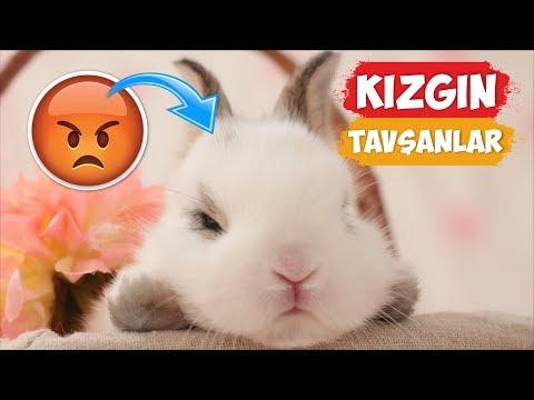 Kızgın Tavşan Videoları Derlemesi!   [2018 Derleme]