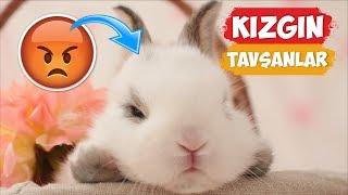 Kızgın Tavşan Videoları Derlemesi! | [2018 Derleme]