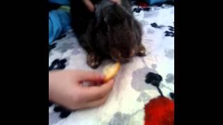 Кролики не едят мандарины