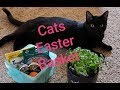 What I got my cats for Easter! 2019