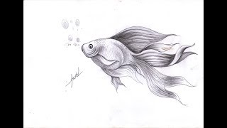 how to draw cute fish - Draw fish By Pencil - Samut CTC Art