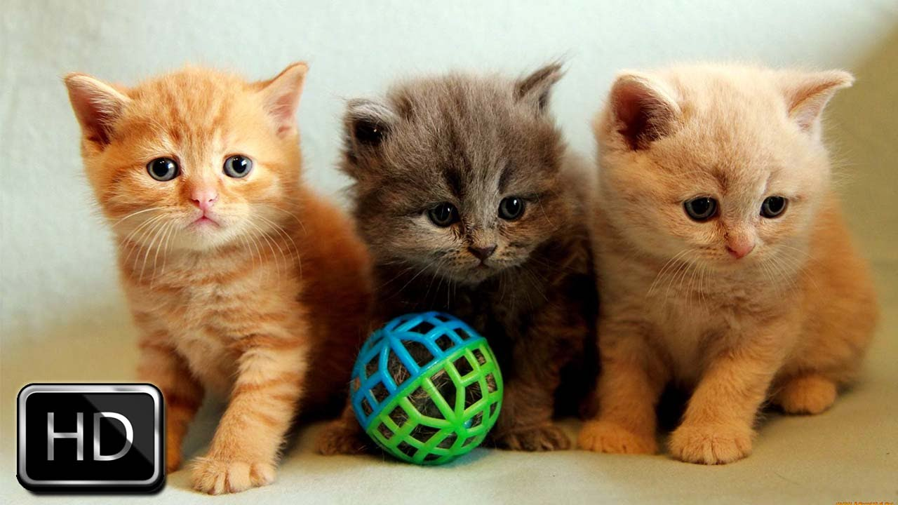 Adorable Kittens Playing Together | Too Cute! - YouTube
