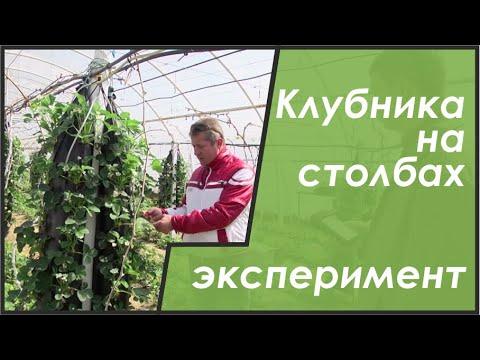 видео: Выращивание клубники на гидропонике