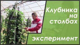 Выращивание клубники на гидропонике(В ЛПХ