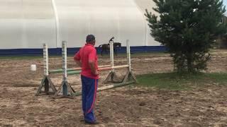 Обучение верховой езде - Конкур Конюшня в Пласкинино