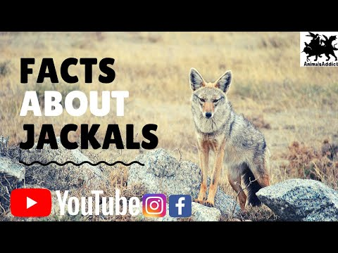 Amazing Facts About