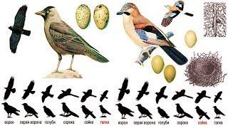 Птицы весной (рассказывает орнитолог Надежда Егорова)