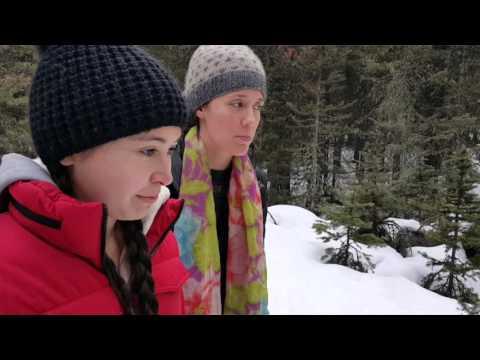 Banff National Park and Dog Sledding
