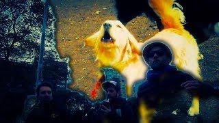 Las Cruces del Plata - Los Perros del Milongón!