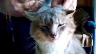 Кот сам просит укол