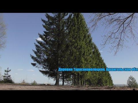 Деревня Тарасонаволоцкая  (Заброшенная военная часть )