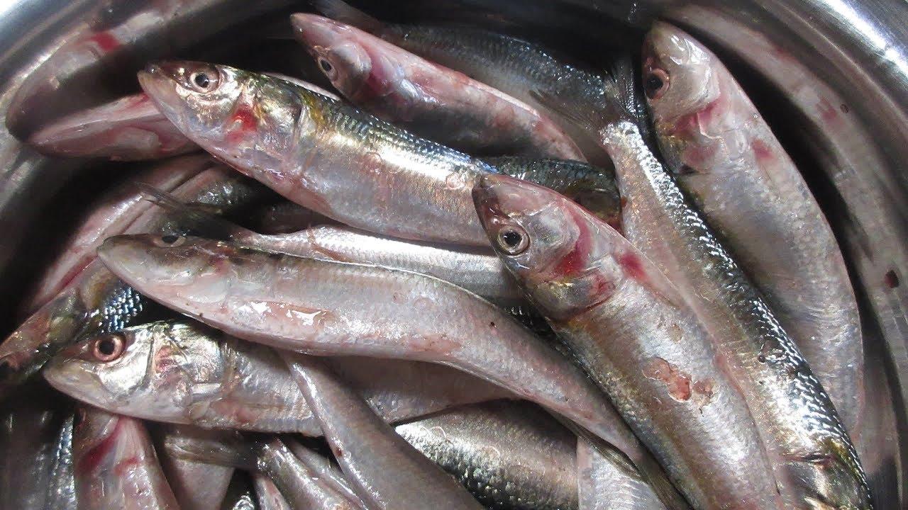 Meen Kulambu Fish Curry Tamil Kitchen Recipes In My Village Food Mathi Curry
