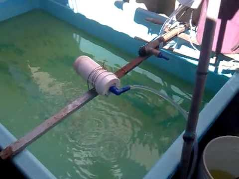 Cria o de til pias em casa piscina 8 hora da limpeza Piscinas para tilapias